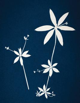Botanical Cyanotype Workshop July 11th, 2018